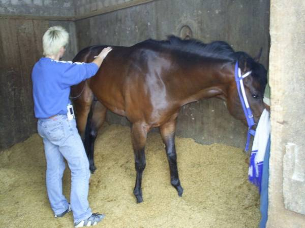how to become a horse physiotherapist