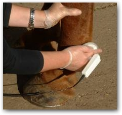 Gilliyan shows the way to work with horses and dogs; one gloved hand, one applicator, the unit sits in a belt around the waist enabling free and easy movement around the horse.  » Click to zoom ->